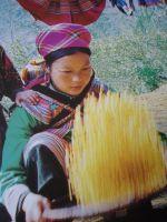 Hmong13_2