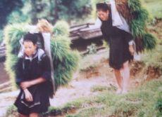Hmong9